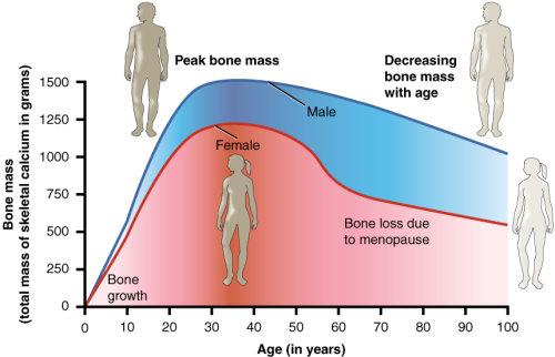 Niseko Chiropractic bone density loss